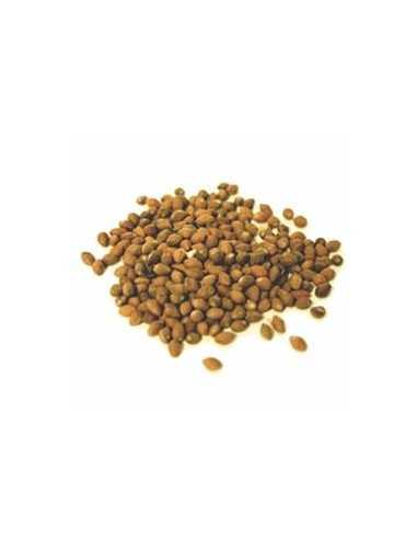 Ololiuhqui (Rivea Corymbosa) 20 semillas